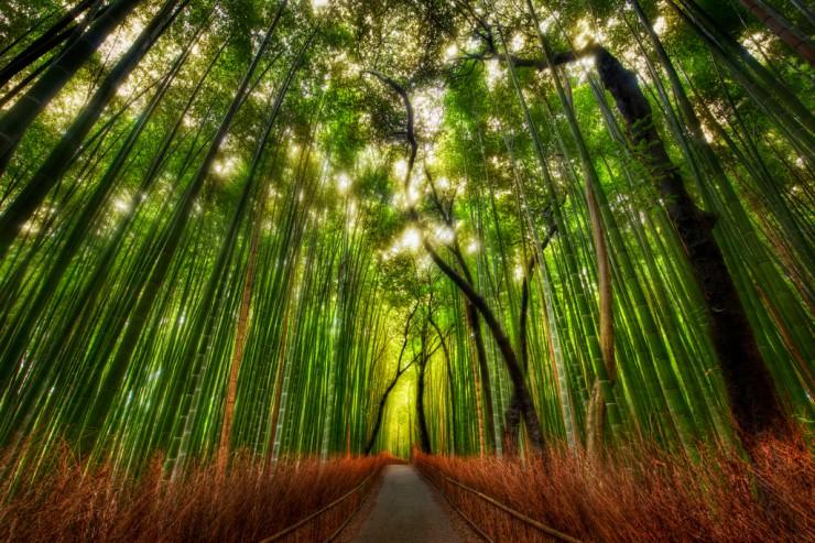 bamboo2-740x493